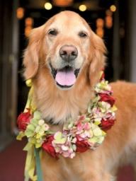 bridemaid dog