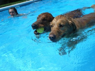 Doggie couple