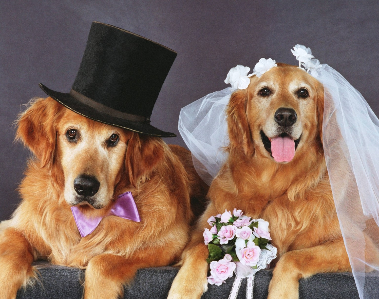 dogs in wedding it s your wedding
